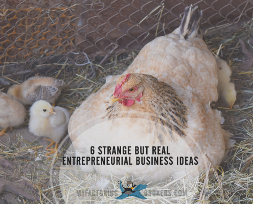 Strange but real entrepreneurial business ideas