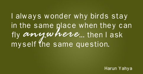 """I always wonder why birds stay in the same place when they can fly anywhere… then I ask myself the same question."" —Harun Yahya"
